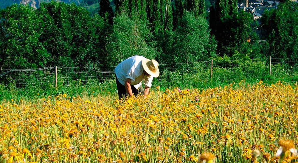 agricultor-campo