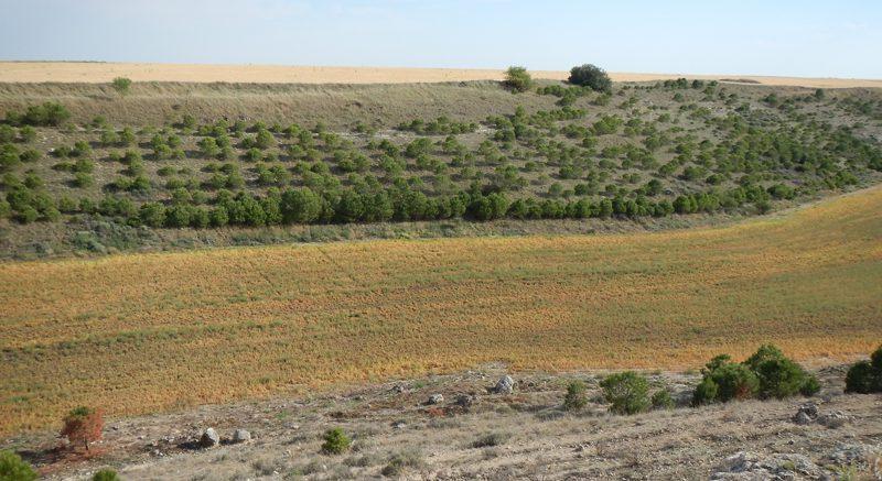 paisaje montes torozos