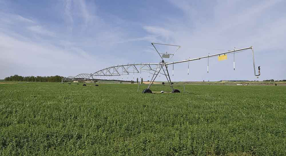 riego finca alfalfa