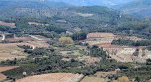 salamanca-paisaje-campos