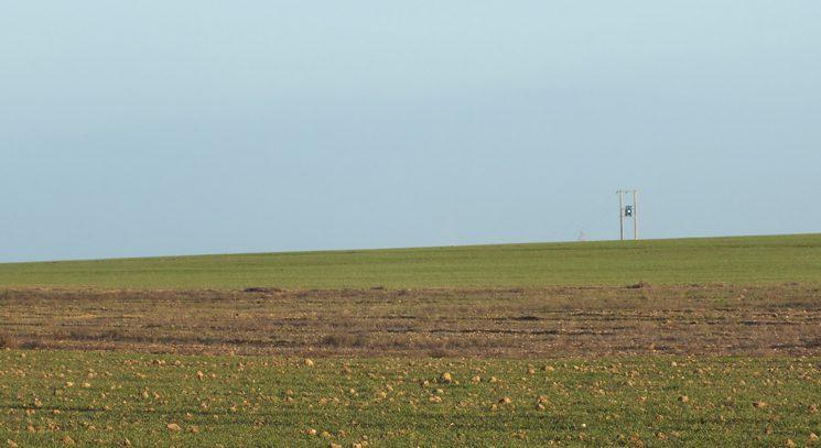 paisaje cultivo