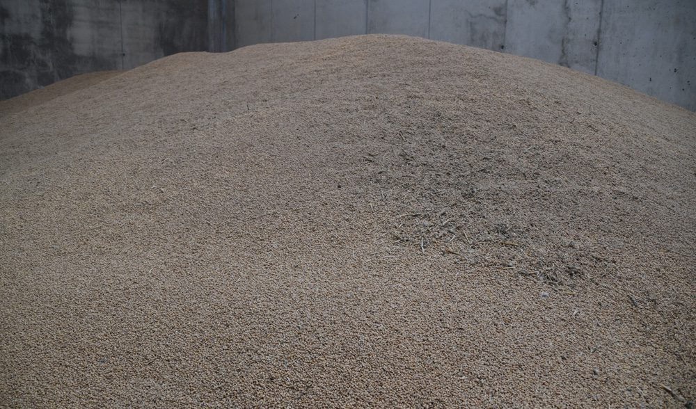 cereal grano