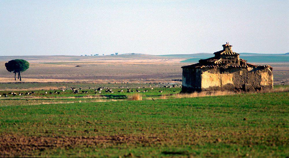 Villafafila zamora palomar