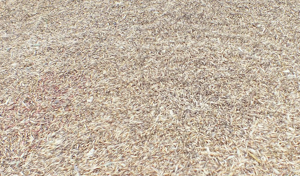 grano cereal
