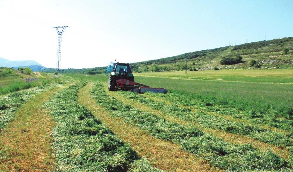 alfalfa firma Jose Luis Fraile