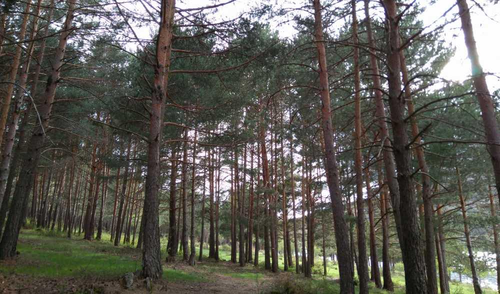 soria laguna negra pinar pino bosque paisaje mayo 2018
