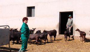 ganaderia-caprino-cabra