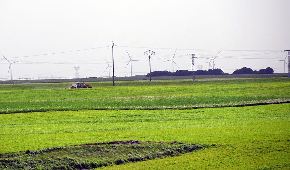 cereal-campo-paisaje fitosanitarios