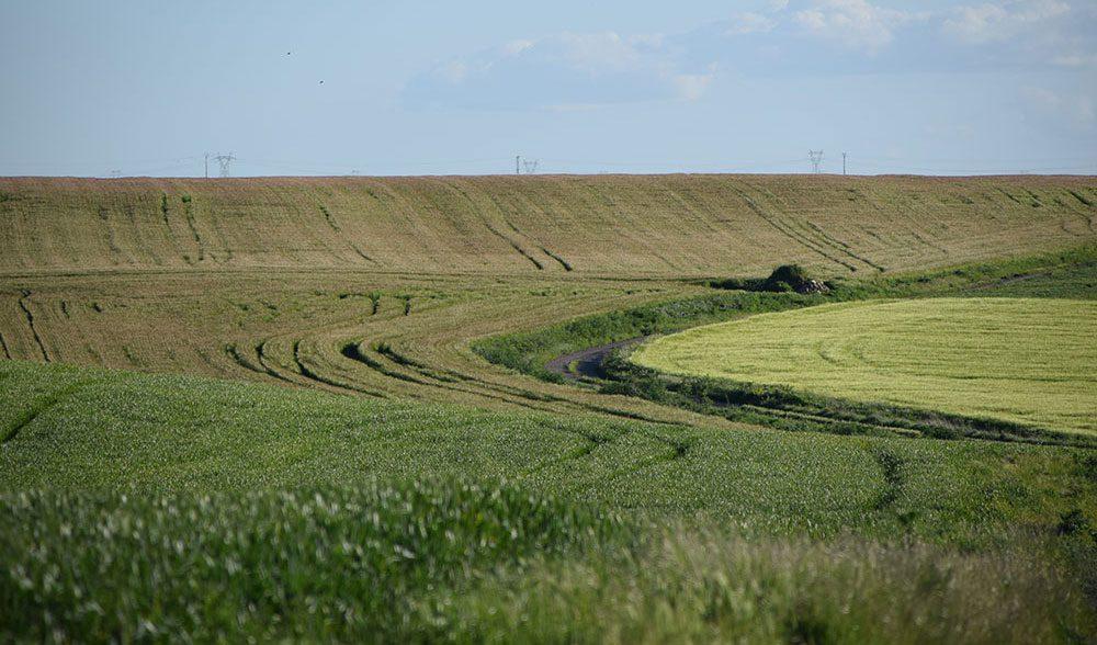 cereal-paisaje