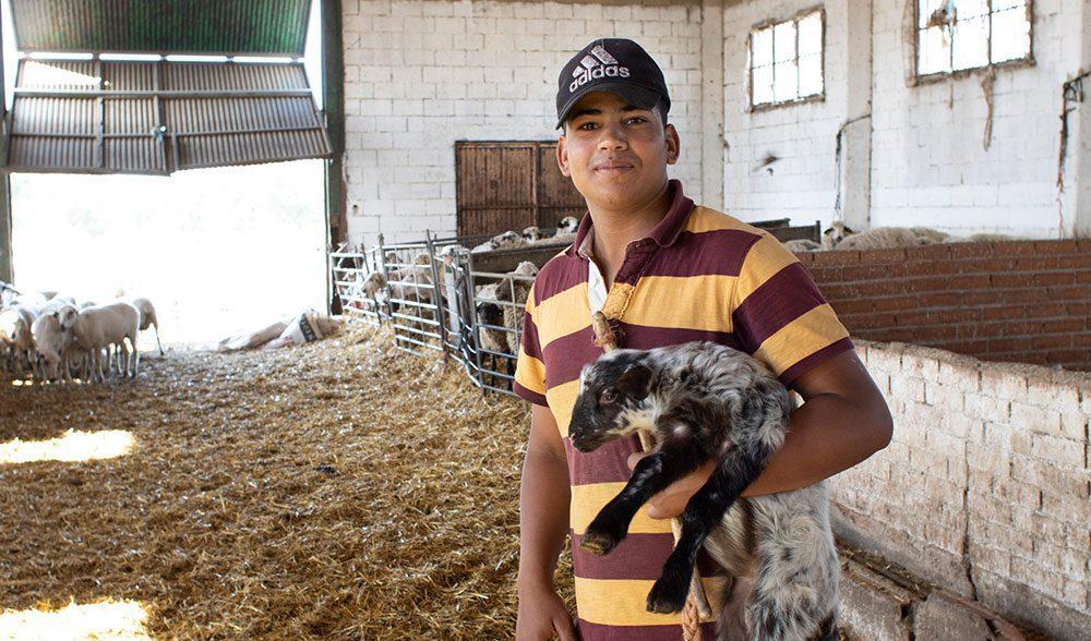 joven inmigrante ganadero oveja cordero