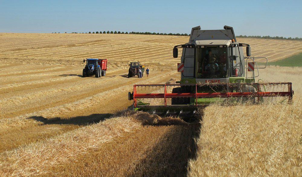 cereal-cosechadora-cosecha