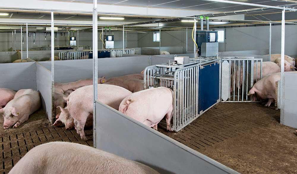 Sistema Gestion Integral Porcina