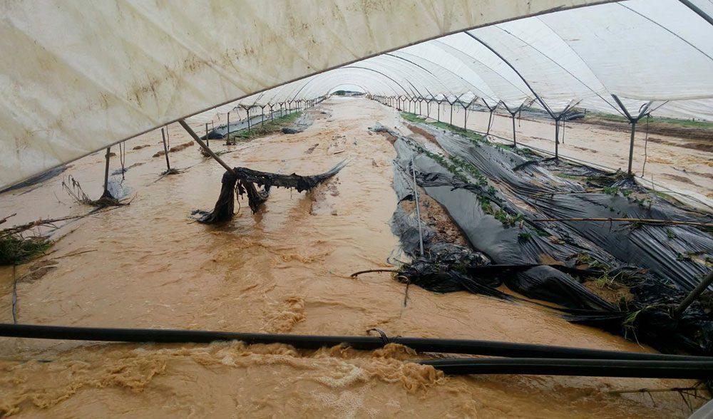 invernadero huelva inundado seguro danos