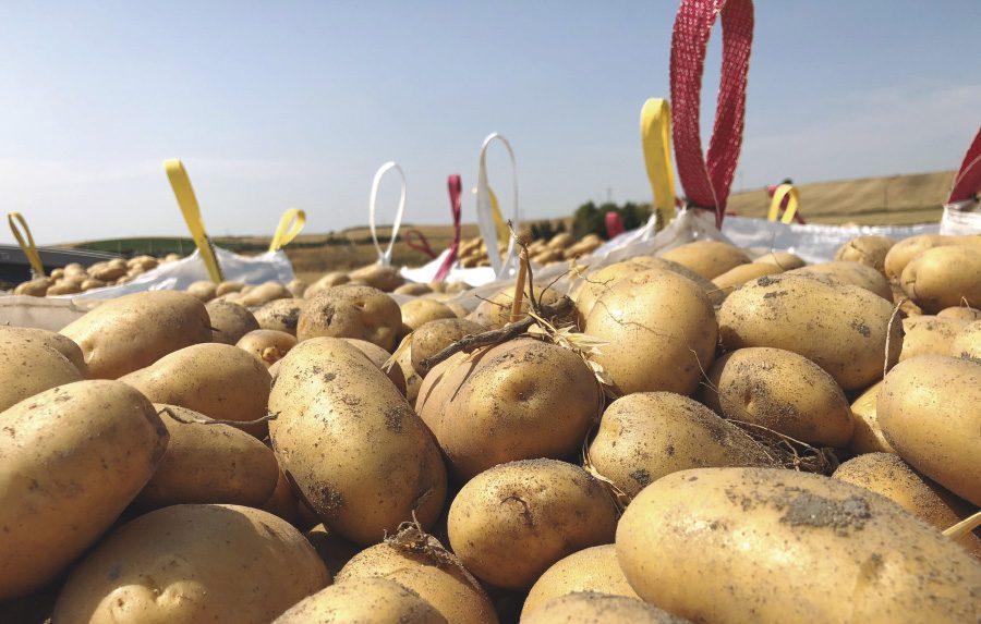 jornada patata introduccion