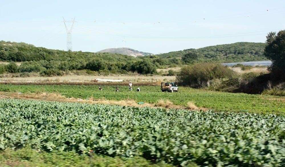 paisaje huerta horticola