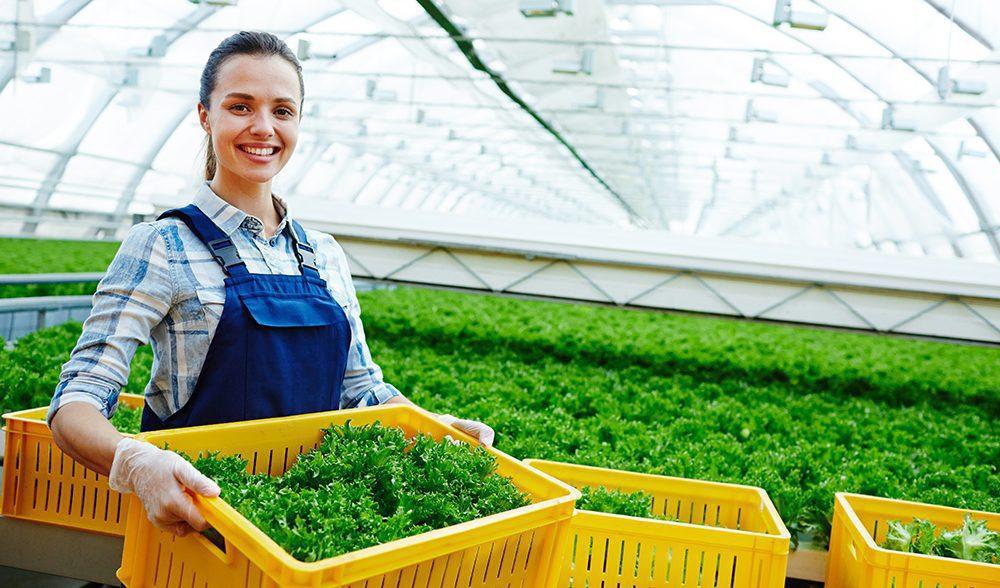 Salad greenhouse horticola invernadero