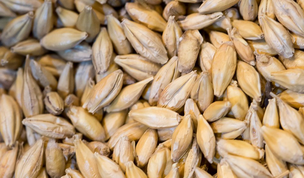 grano-cereal