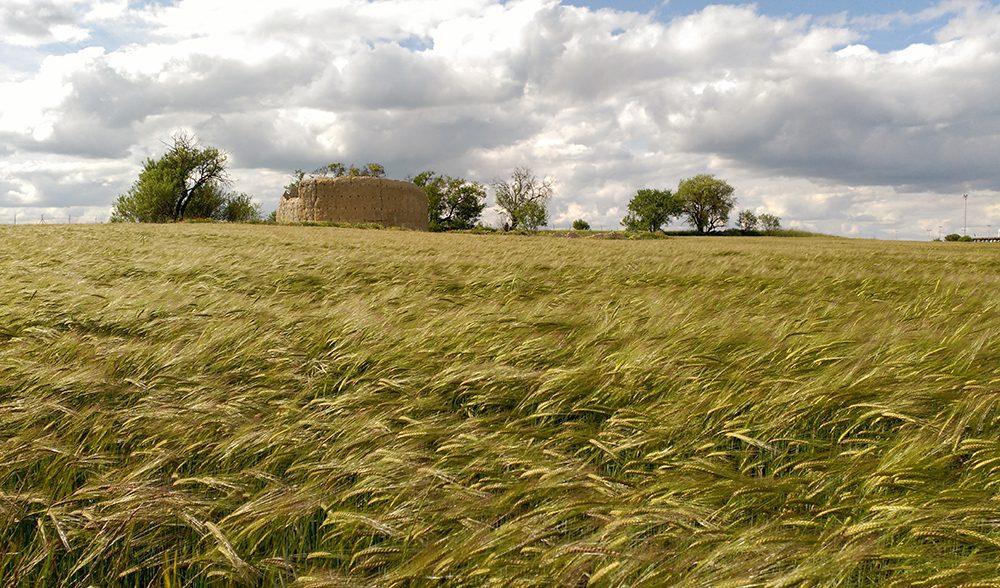 cereal paisaje