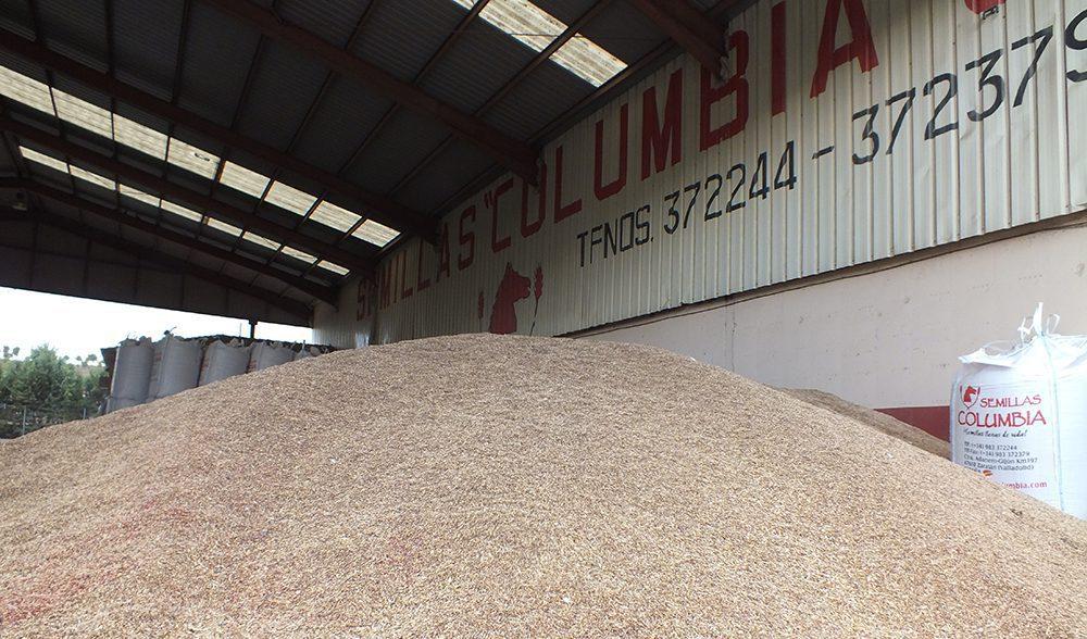 grano cereal semillas columbia