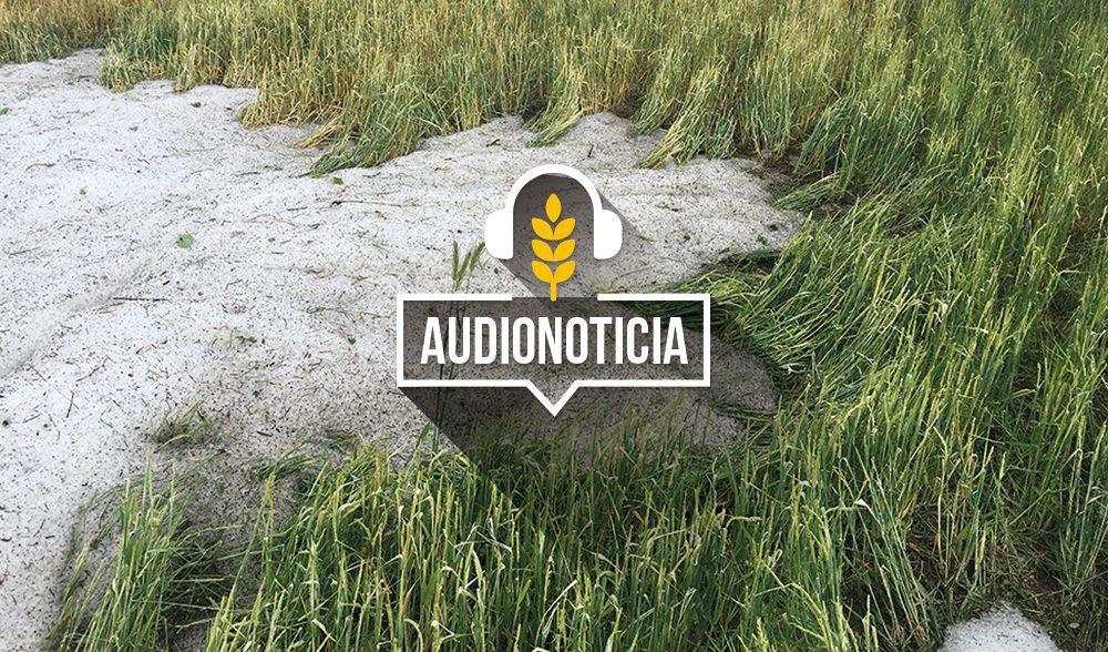 pedrisco-cereal-audionoticia