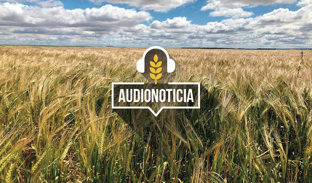 Plantilla-audionoticias