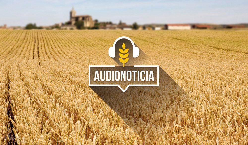 cereal audionoticia
