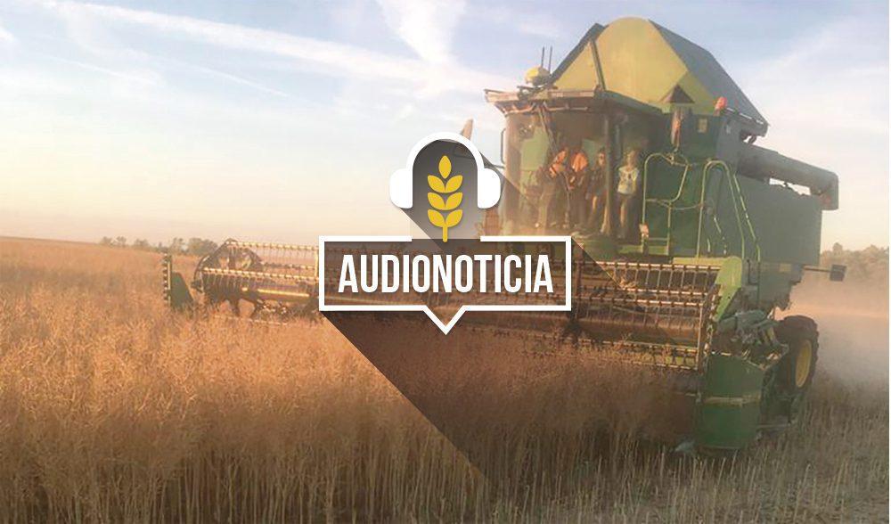 colza-audionoticia