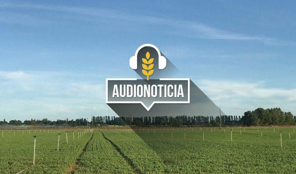 el-tiempo-audionoticia