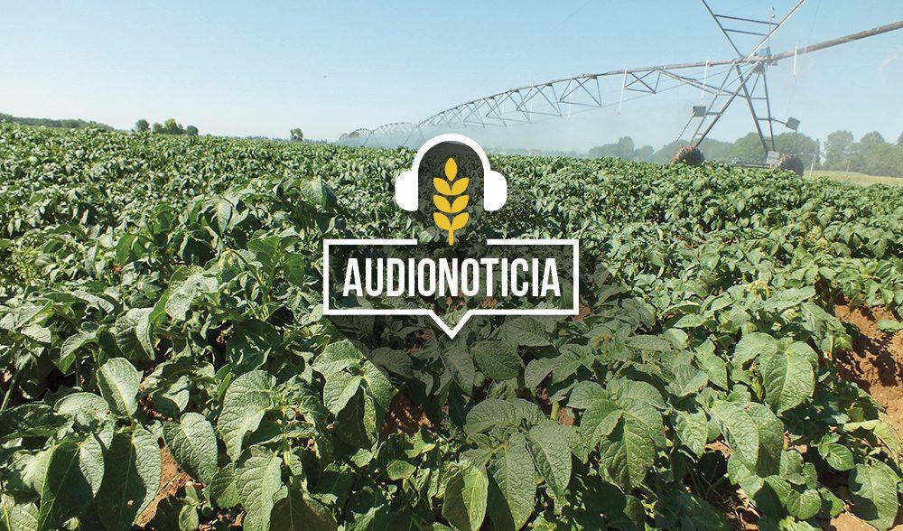 patata-audionoticia