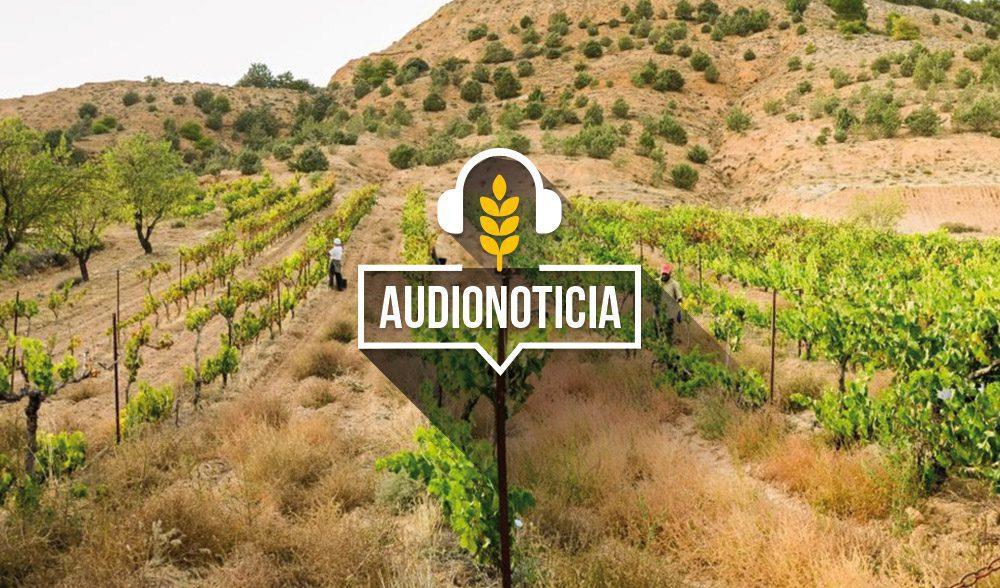 vinedo-audionoticia